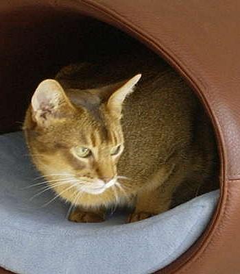 Кожаная кровать для кота