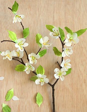 Веточка цветущей вишни