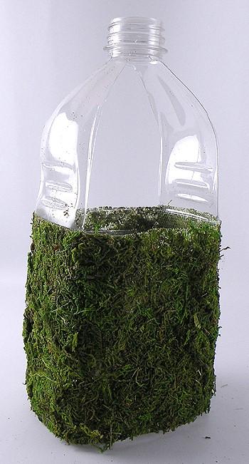 Мох на пластиковой бутылке