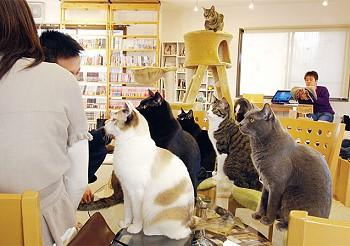 Ресторан для кошек в Японии