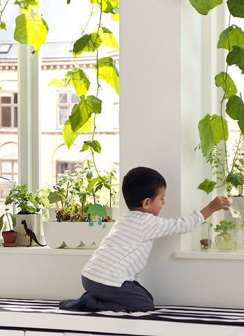 Выращивание на подоконнике