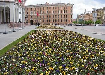 Фото парадного цветника из виолы. Мариинский дворец в Петербурге