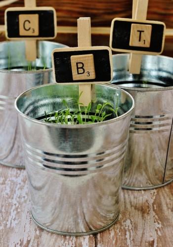 Растения ароматизаторы