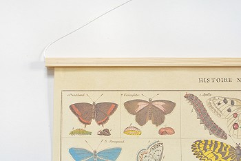 Постер с бабочками