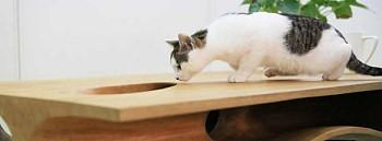 Мебель для кошки