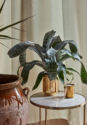Растения для декора интерьера